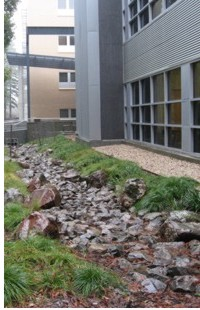 Physical Science Building Swale